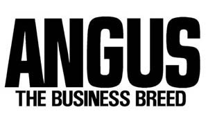 angus-thebusiness-breed
