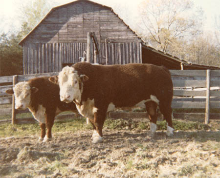 Early Herd Picture